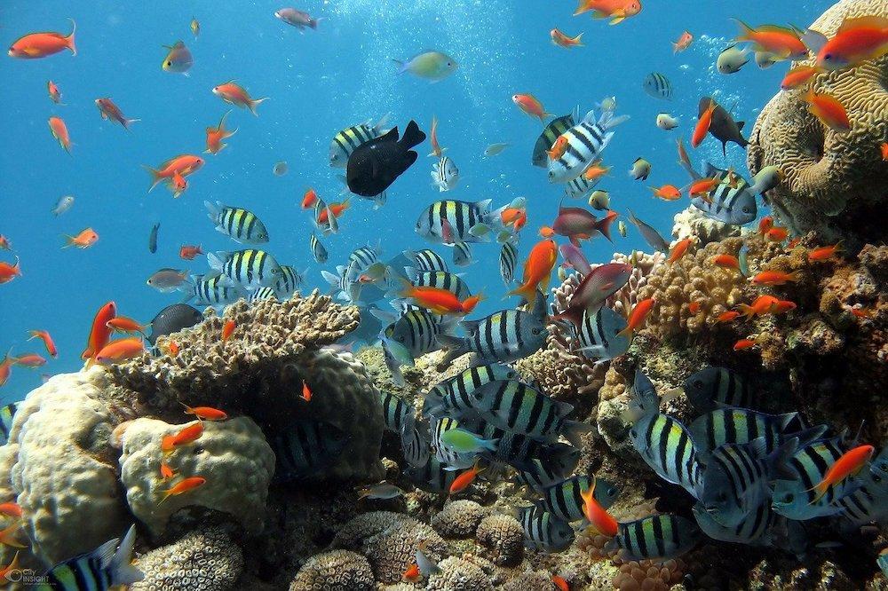 海の環境危機と持続可能な海洋利用 ―資源・エネルギー・食糧―