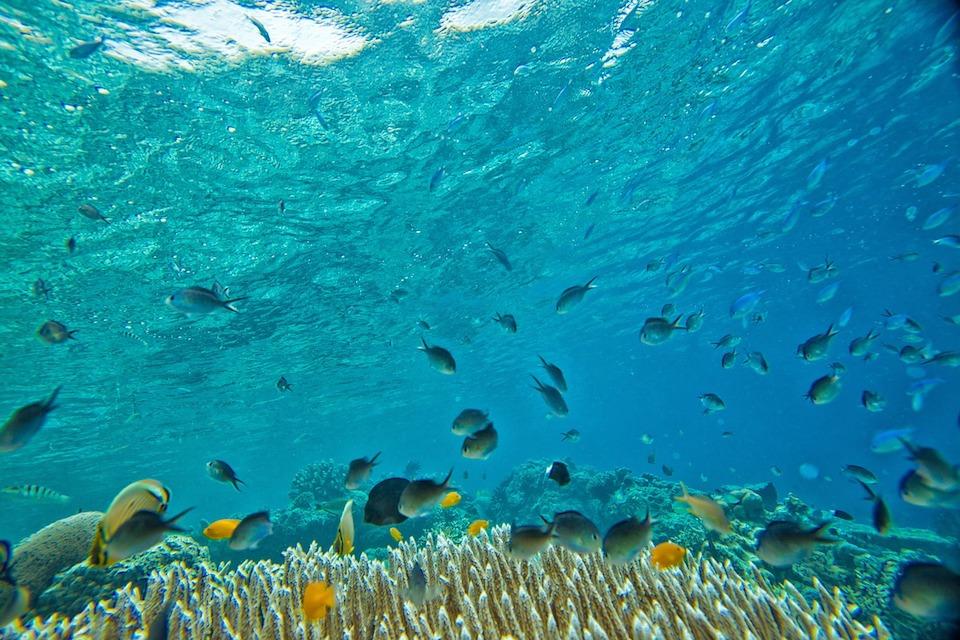 「水中文化遺産保護条約」をめぐる最近の動向