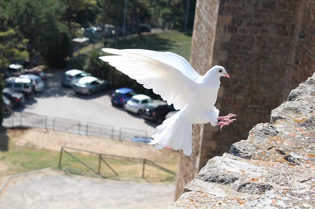 平和の概念再考:平和学における和解の位置付け